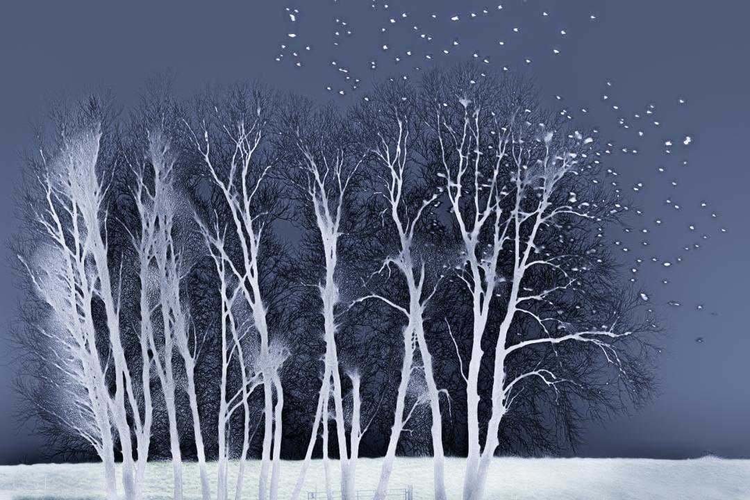 bomen bij de sluis